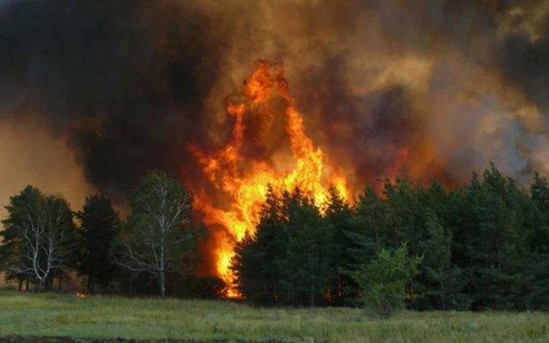 """Закривайте вікна: в Чорнобилі горить """"Рудий ліс"""", вітер несе на Київ"""