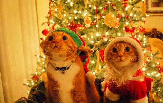 Лучшие анекдоты на понедельник 16 декабря заставят вас поверить, что Новый год близко