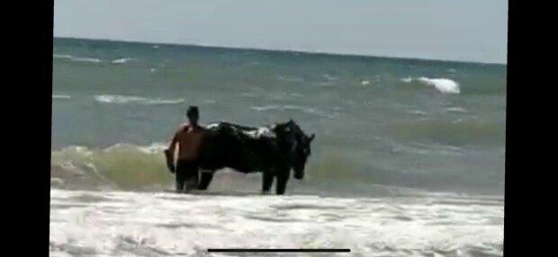 В Запорожье мужчина искупал Мустанга в море, туристы надули губы