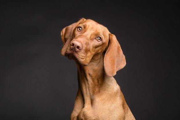 Собака, фото Pixabay