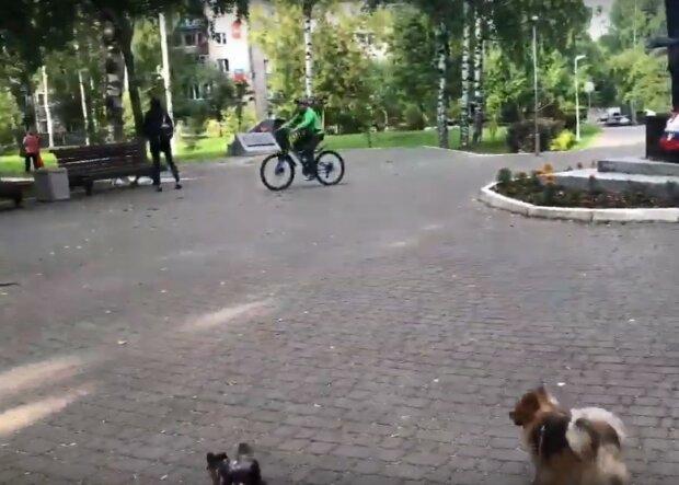 прогулка в парке, скриншот из видео