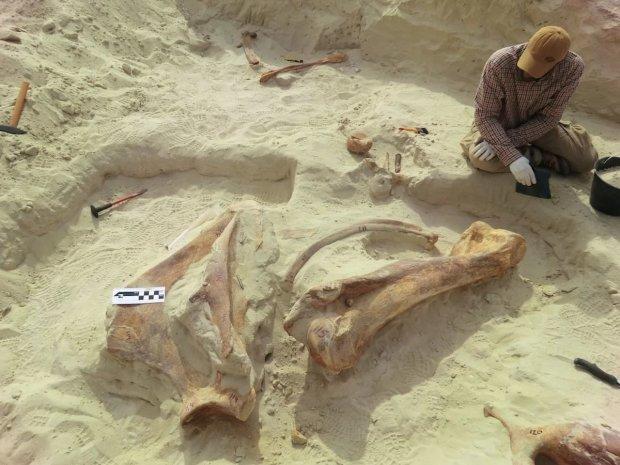 Кладовище гігантів: археологи натрапили на унікальне поховання