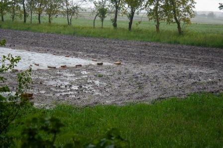 Тернопольщина рискует остаться без урожая - селяне рыдают над побитыми градом огородами