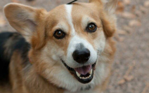 Домашній улюбленець або детектор довіри: вчені з'ясували, що собаки можуть розрізняти ненадійних людей