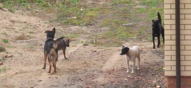 В Хмельницком пенсионеры-живодеры приковали собаку к машине цепями - тащили, оставляя кровавый след