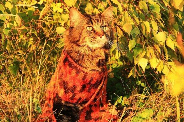 Осенний котяра, фото из открытых источников