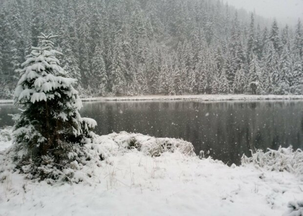 сніг в Карпатах, фото:narodna-pravda