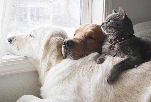 5 простых способов подружить собаку с кошкой