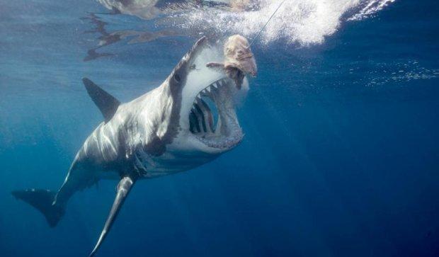 Вчені випробували бензопилу з акулячих зубів