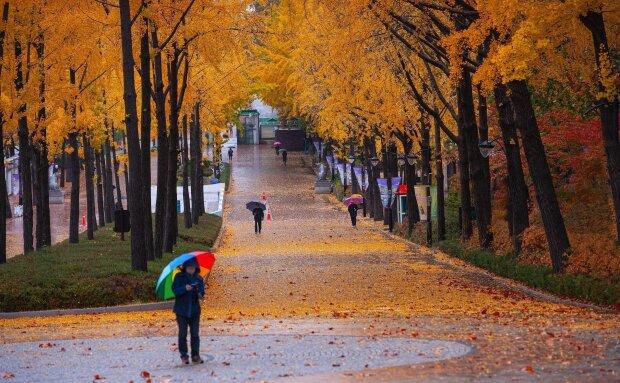Осень, фото: kurs.com.ua