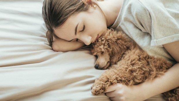 Песика у ліжко: як висипатися без снодійного