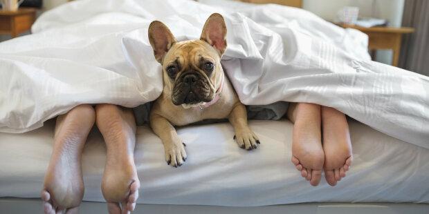Сім'я збоченців:  божевільна пара сяде за інтим з собакою