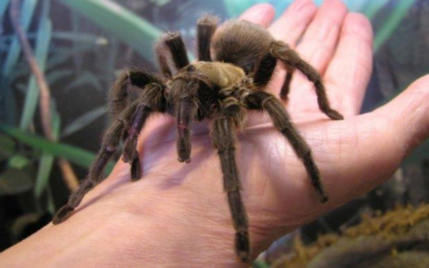 Дослідники підрахували, скільки часу витратять павуки на знищення людства