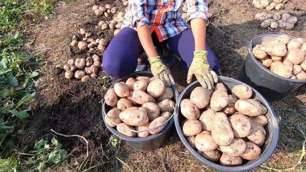 Новые цены на овощи заставят днепрян хлебать суп без картошки