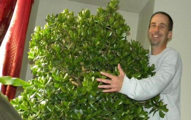 Денежное дерево: как разбогатеть за считанные дни