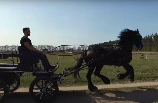 конная телега, скриншот из видео