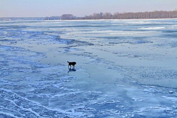 Військовий показав приклад мужнім вчинком: виніс пса на руках прямо з крижаної води