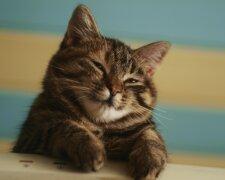 кошеня, pinterest