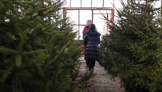 Елки в Иавно-Фракновске, кадр из видео, изображение иллюстративное: YouTube