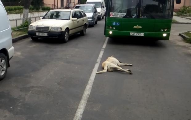 Що з такими робити? Живодер викинув собаку з вікна: відео 18+