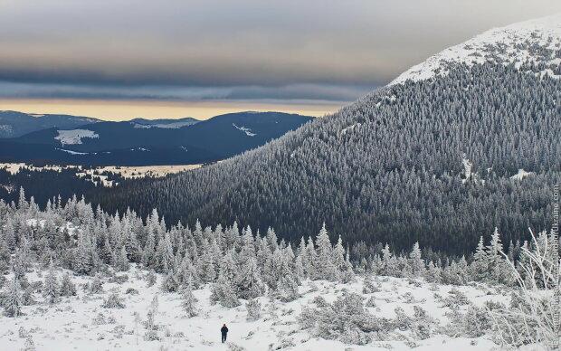 Настоящая зима: украинцам показали заснеженные Карпаты, - фото морозной сказки