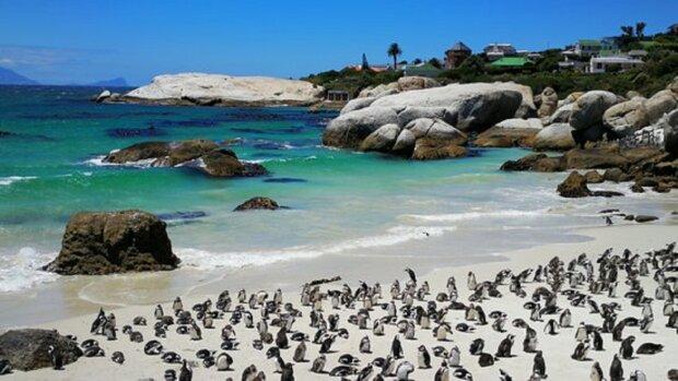 Пингвины. Фото: TripAdvisor