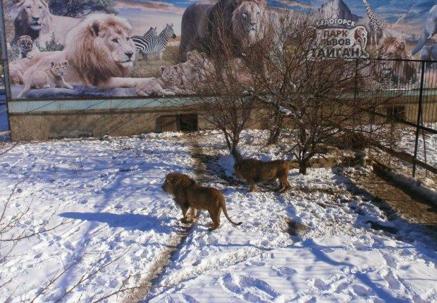 Смертельна катастрофа паралізувала Крим: страшна загроза нависла над тисячами життів