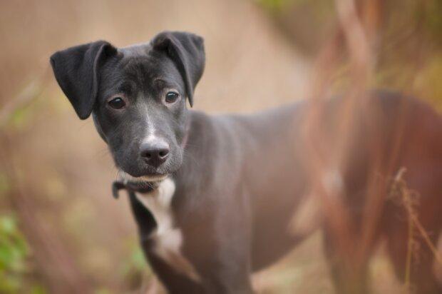 щенок, фото Pxhere