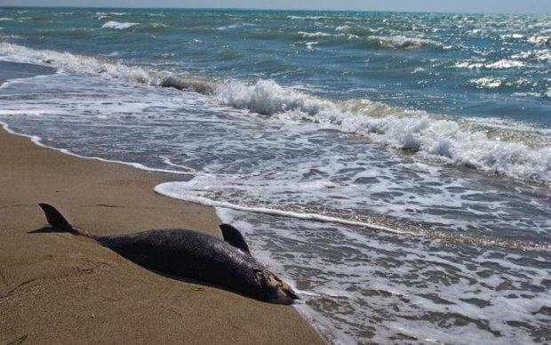 Десятки дельфінів загинули в анексованому Криму