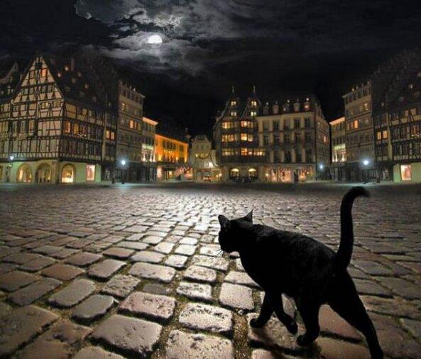 чорний кіт в нічному місті, фото з вільних джерел