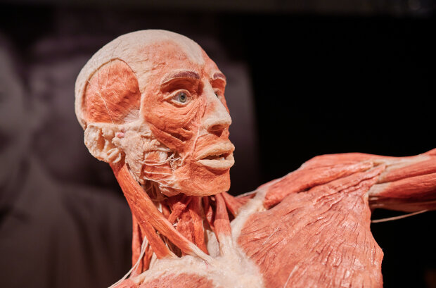 Выставка Body Worlds. Фото: Андрей Максимов