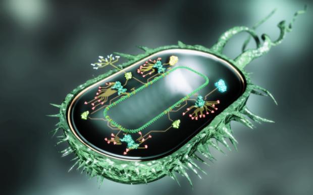 Вчені почали програмувати клітини