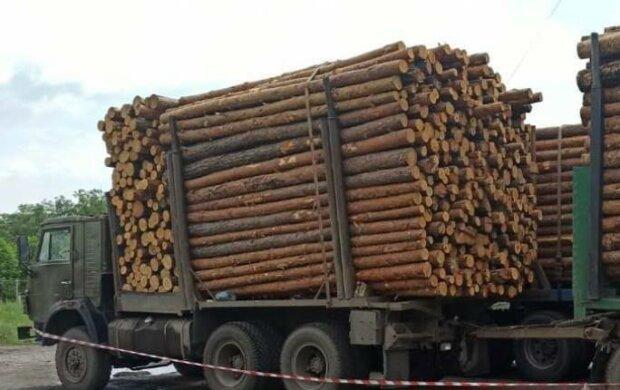"""Під Харковом накрили """"чорних лісорубів"""" - вивозили ліс фурами під гімн України"""