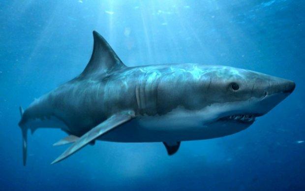 Дрон заснял нападение акулы на ныряльщицу