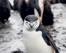 NASA очікували чого завгодно, але тільки не пінгвінів