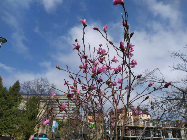 """Стихия пробудила маленьких вестников тепла, львовяне в восторге: """"Наконец весна!"""""""