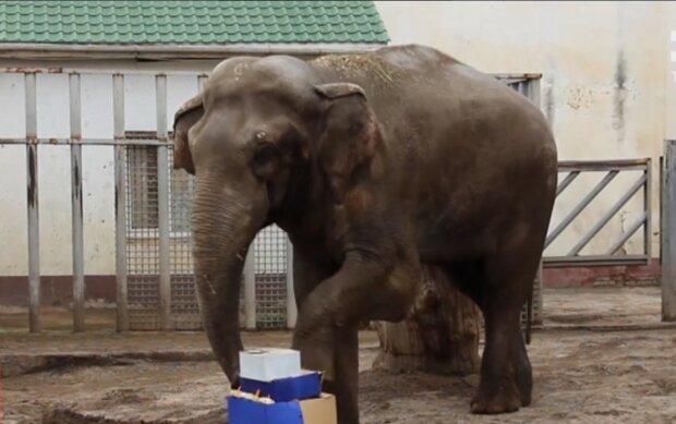 слон, скриншот из видео