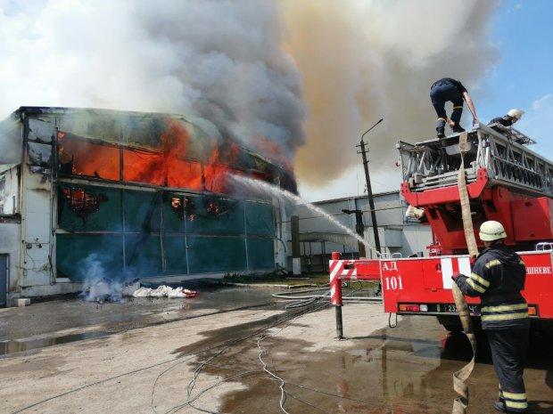 Под Киевом вспыхнула птицефабрика, несчастный куры едва не превратились в гриль: кадры из огня