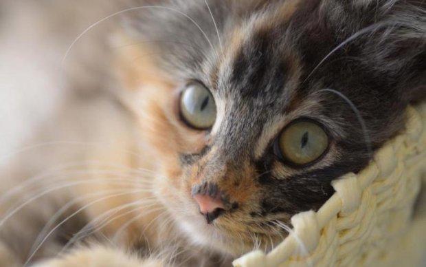Київський шкуродер отримав реальний термін за кота