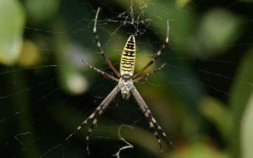 Що робити якщо укусив павук: слушні поради від доктора Комаровського