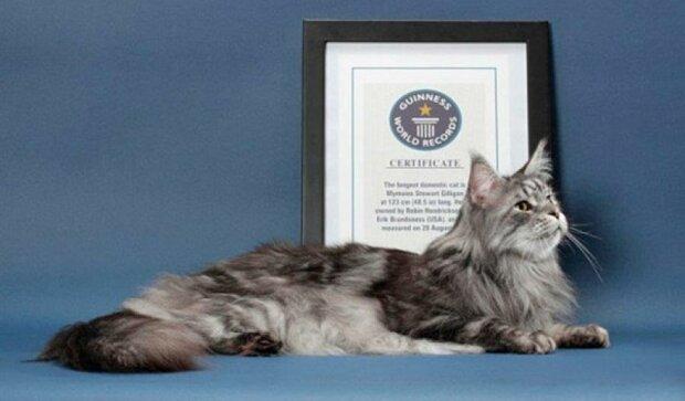 15 вражаючих котів-рекордсменів
