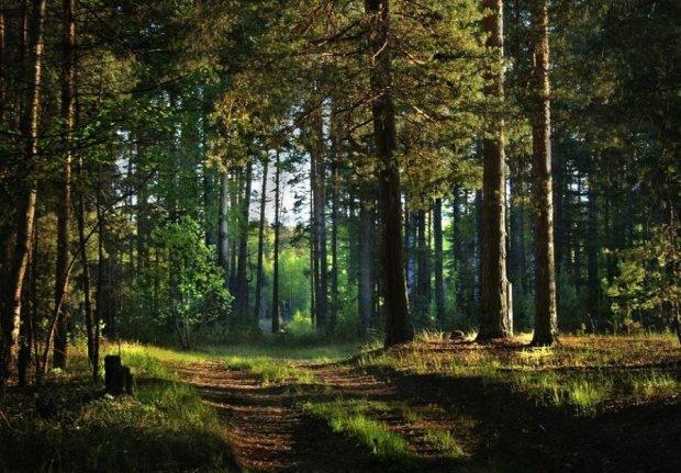 У Коблево збиралися по-тихому вкрасти 48 гектарів лісу