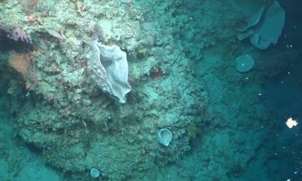 Большой Барьерный риф, скриншот
