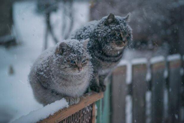 Зима в Харькове застыла в нерешительности 16 января: ни холодно ни жарко