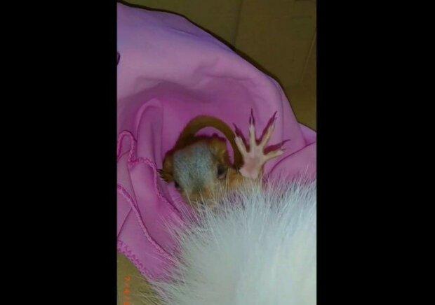 Кошка днепрянки притащила домой необычного малыша, пушистый хвост и крохотные лапки — приняла за котенка