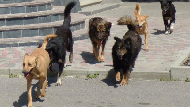 Стая собак напала на женщину, фото: Город Х