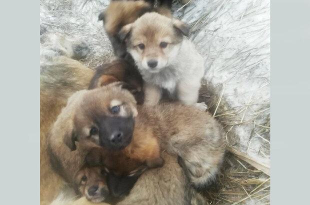Людям стоит бы поучиться: щенки несколько дней согревали собой погибшую от холода мать