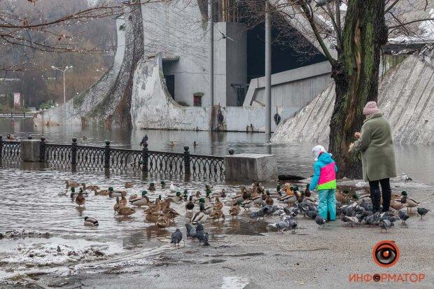 Затопленный парк / фото: Информатор