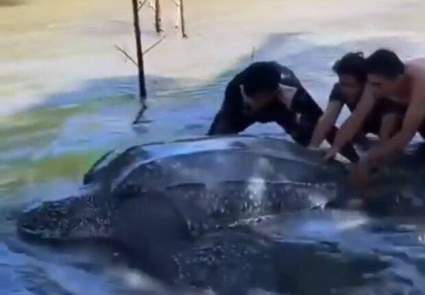 Застряла в болоте: неравнодушные спасли гигантскую черепаху от неминуемой гибели