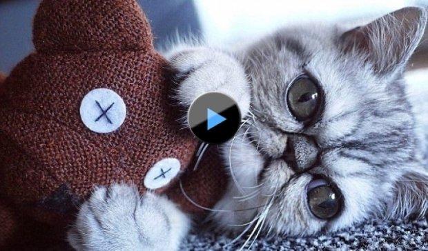 Кіт з величезними очима став зіркою Instagram